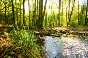 Foresta di Dean